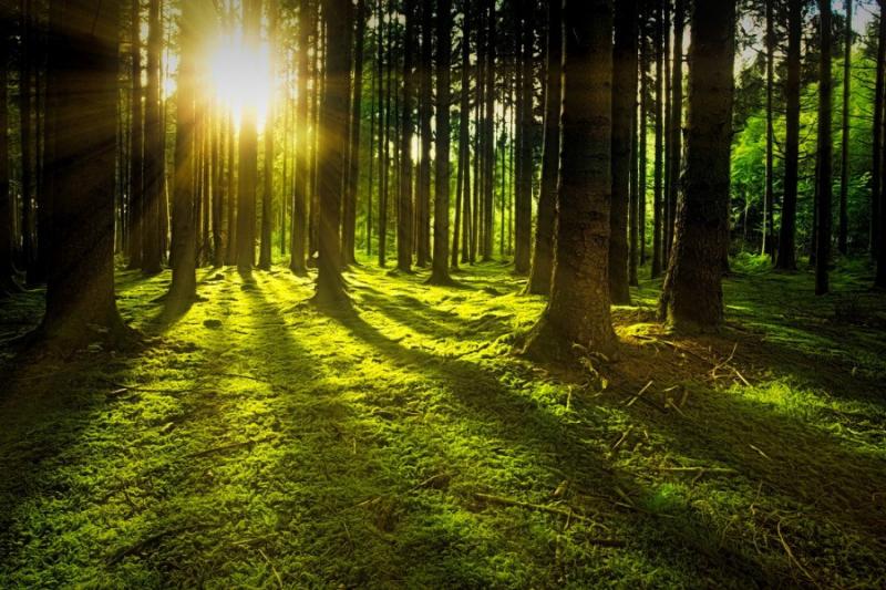 Leśnicy: Lasy otwarte, ale spacer warto zaplanować - energiapress.pl